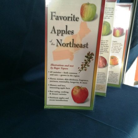 Favorite Apples of the Northeast