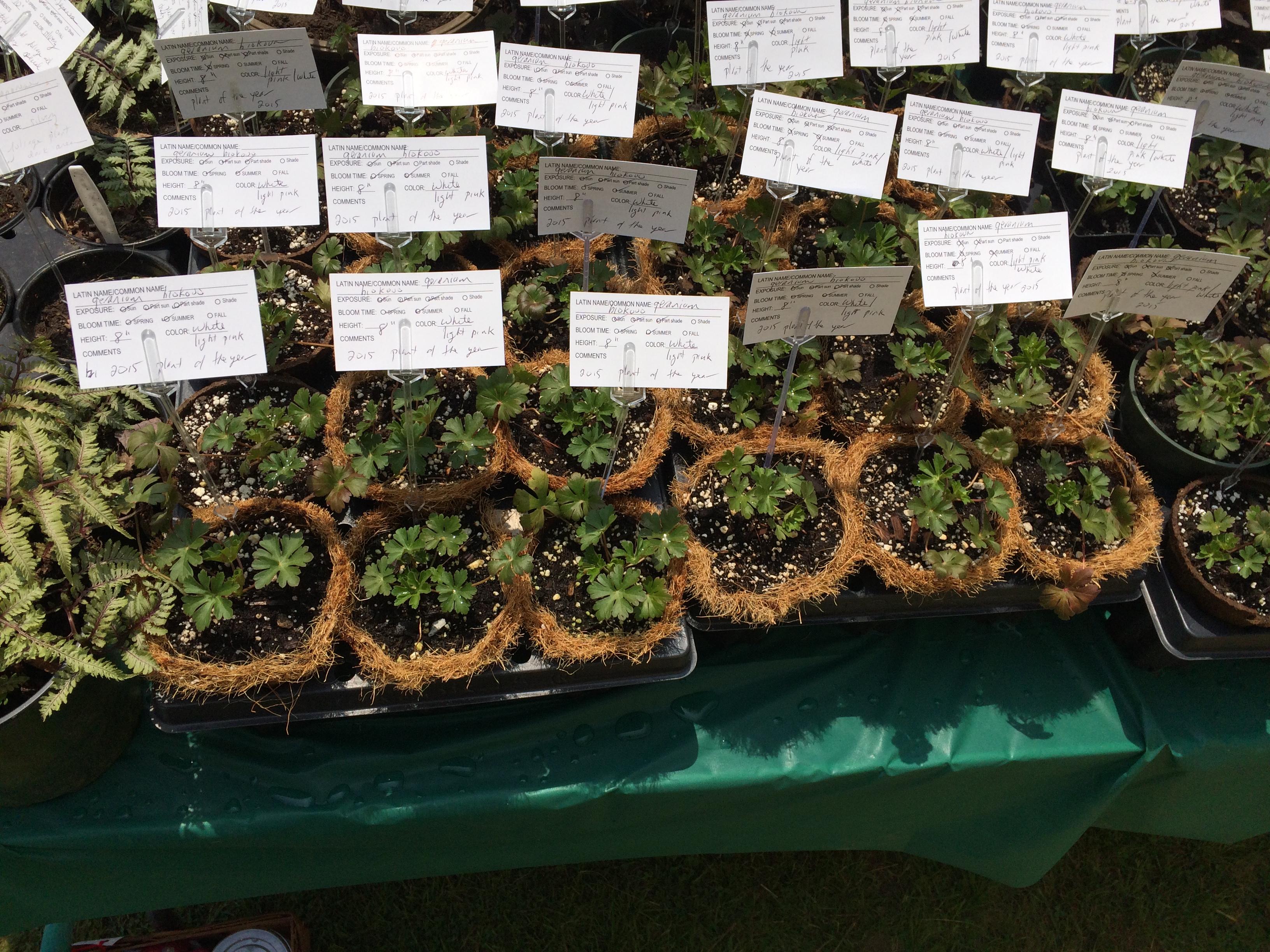 Monadnock Garden Club Plant Sale - Historical Society of Chesire County