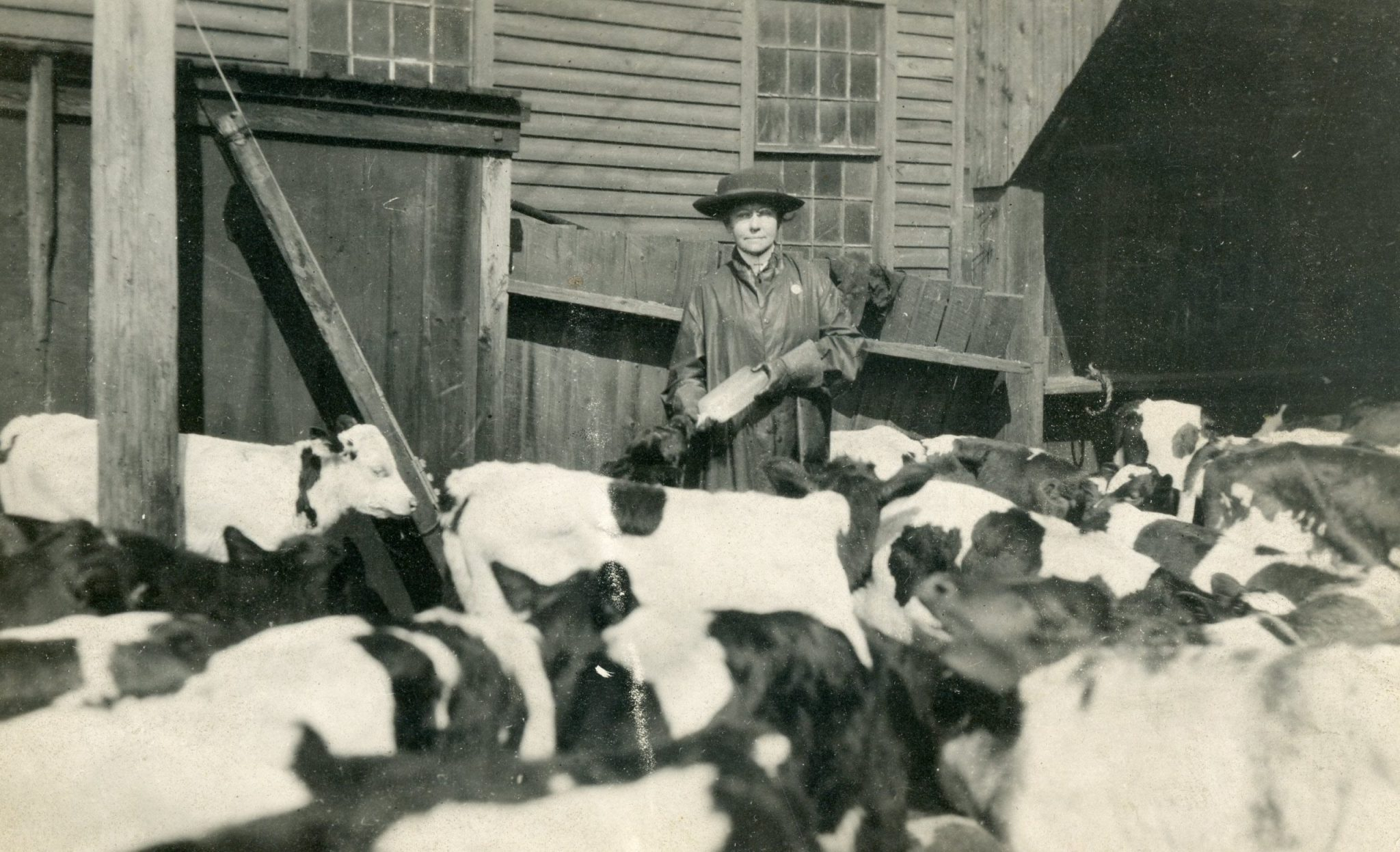 Jennie Powers black and white photo next to cows
